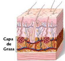 Celulitis en la Piel