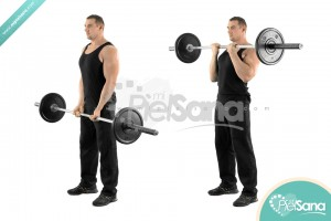 Close Grip Standing Barbell Curl