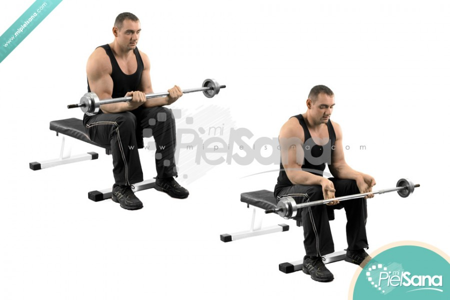 Seated Barbell Wrist Curl