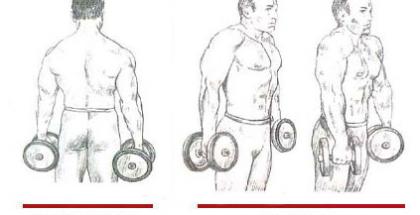Encogimiento de hombros con mancuernas movimiento