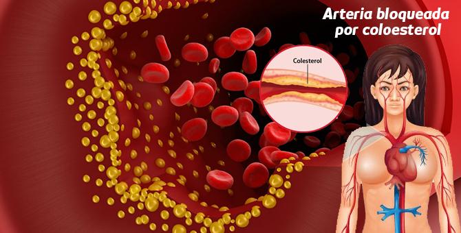 Muy en cuanto tiempo se puede bajar de peso con la metformina corteza pia durante