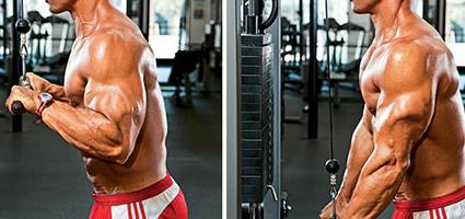 Rutinas para Triceps