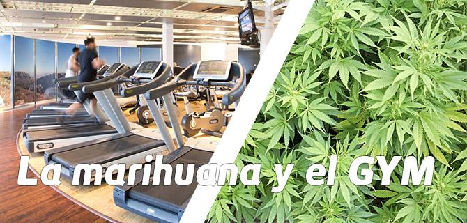Marihuana y GYM