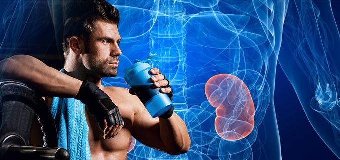 renal efectos proteina