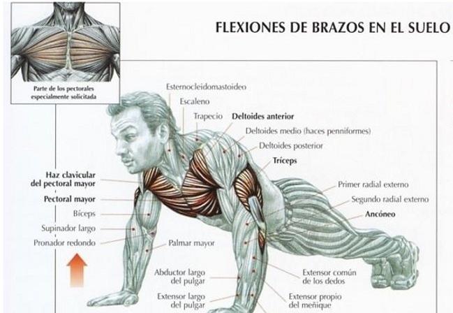 flexiones o lagartijas