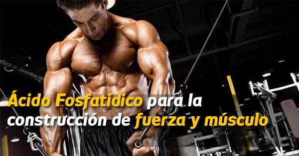 acido fosfatidico fuerza y musculo