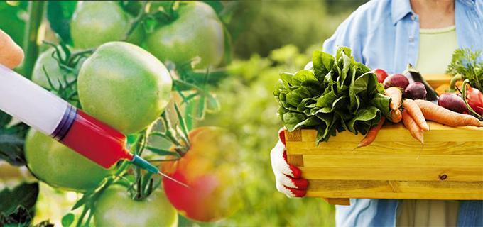 Organicos vs Trangenicos