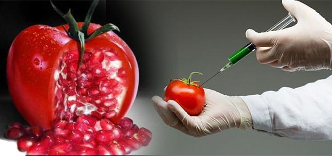 alimentos transgenicos en contra
