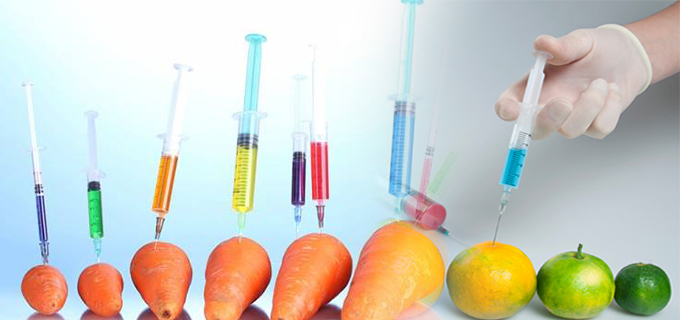 transgenic foods