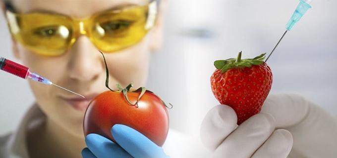 alimentos transgenicos frutas